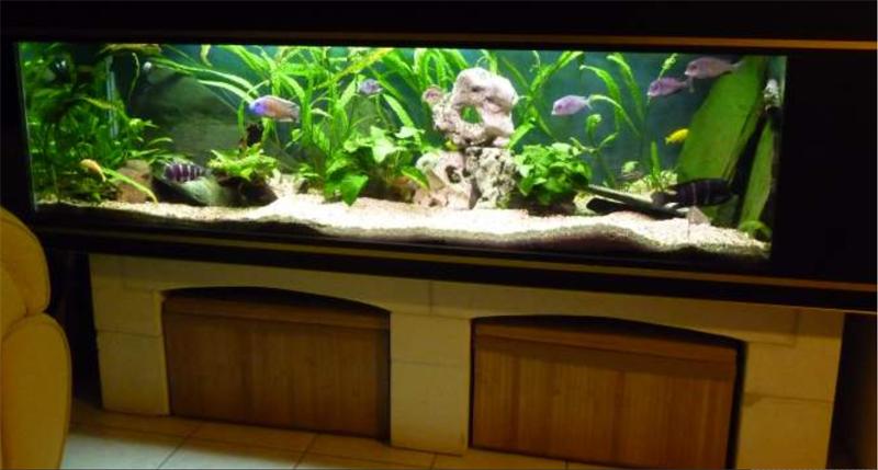 Mat riel aquarium eau de mer 100l for Achat aquarium design