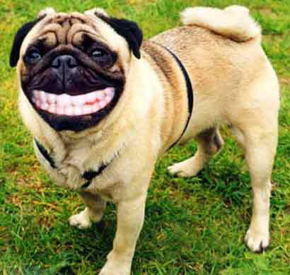 """L'image """"http://i17.servimg.com/u/f17/11/12/55/83/sourir14.jpg"""" ne peut être affichée car elle contient des erreurs."""