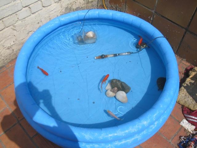 Mettre tortues d 39 eau dans un tang aquariums et for Bassin exterieur pour tortue