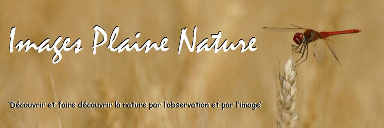 3ème Images Plaine Nature (Longecourt-en-Plaine)