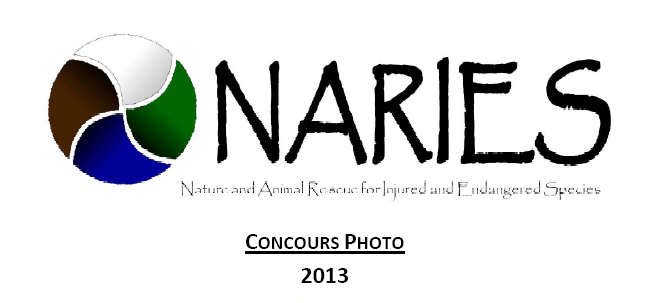 Concours photo du printemps 2013 de l'association NARIES