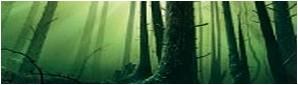 Les Bois Sombres