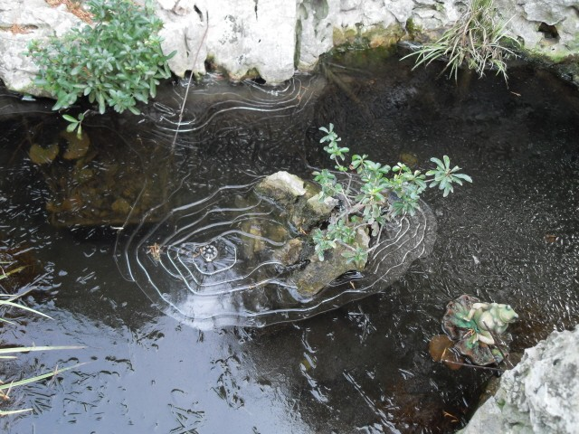 Le bassin et sa rocaille page 2 - Bassin balcon poisson grenoble ...