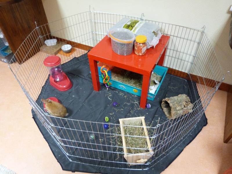 le terrier des lapins afficher le sujet vos installations int rieur. Black Bedroom Furniture Sets. Home Design Ideas