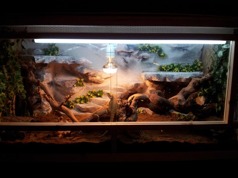 nouveau terrarium pour mes pogo. Black Bedroom Furniture Sets. Home Design Ideas