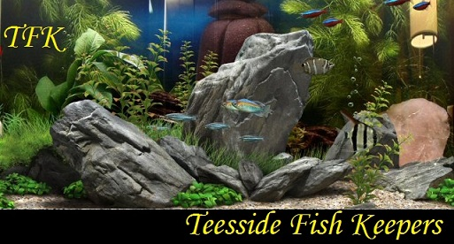 Teesside Fish Keepers Forum