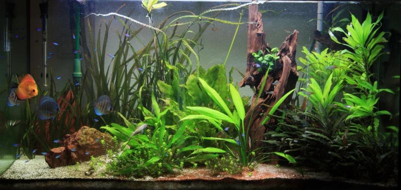taille aquarium pour discus