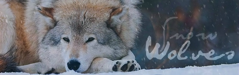 Snow  Wolves