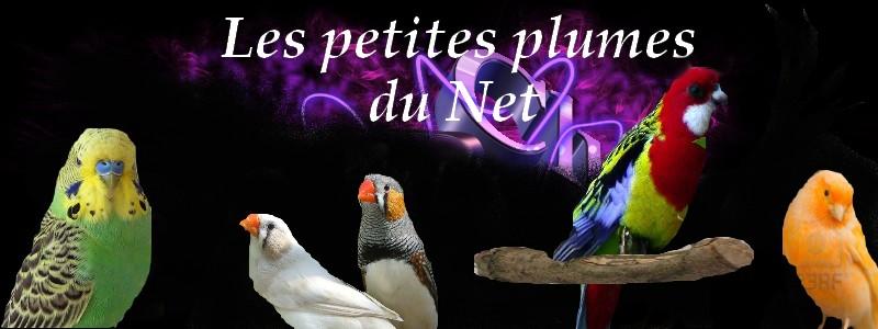LES PETITES PLUMES DU NET